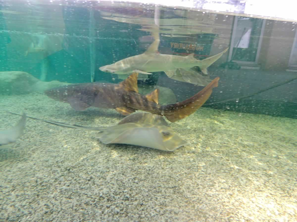 https://jmusselmanconstruction.com/wp-content/uploads/2020/08/Sharks.ray_.jpg